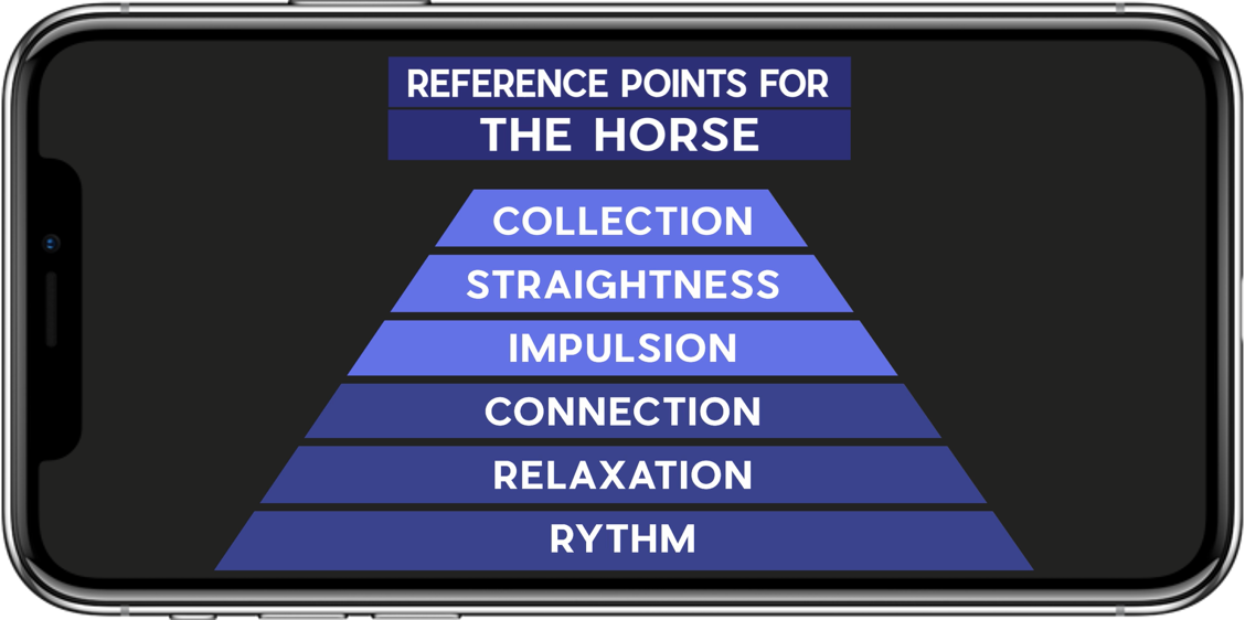 reference points for the horse